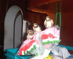indian-birds-2